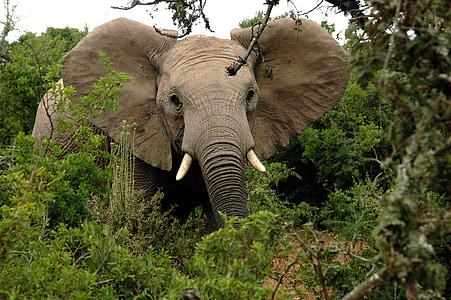 photo of elephant beside tree