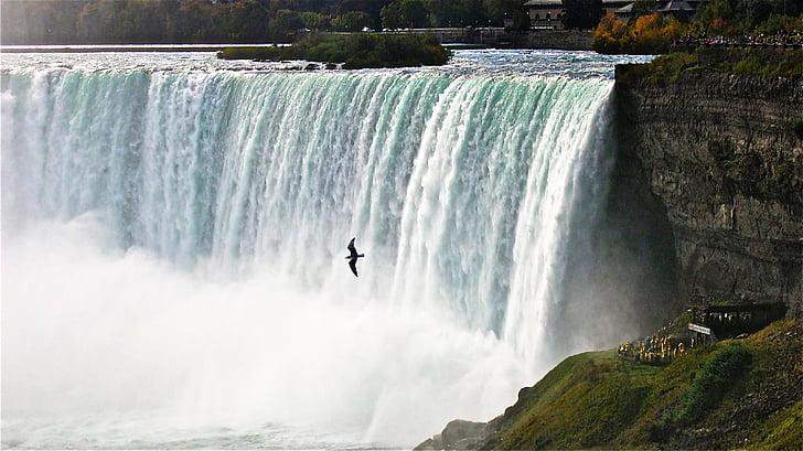 bird flying over block waterfalls