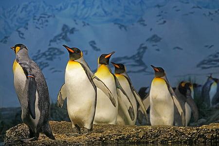 herd of emperor penguins