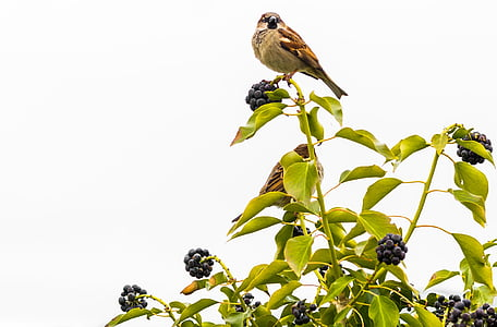 bird perching on plant