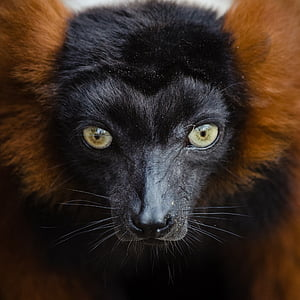 black and brown animal in closeup photo