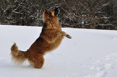 tan dog on snow
