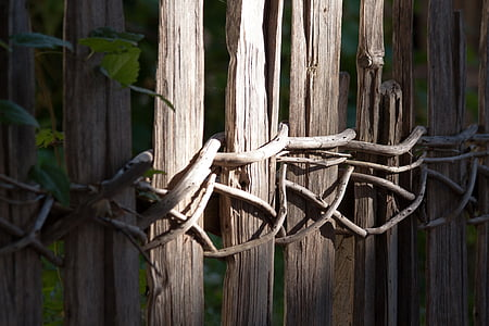 brown wooden fence with roots