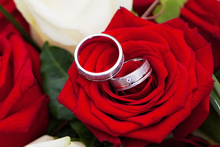 two silver-colored rings on red flower
