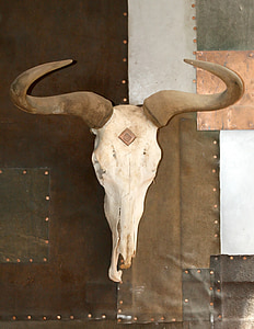 photo of animal skull