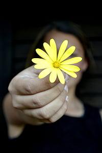 woman holding yellow osteospermum flower