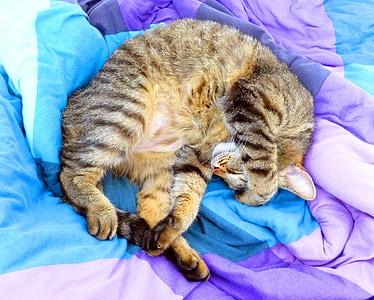 silver tabby cat lying on purple and teal textile