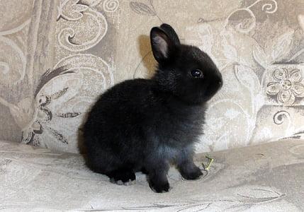 black rabbit on gray floral textile