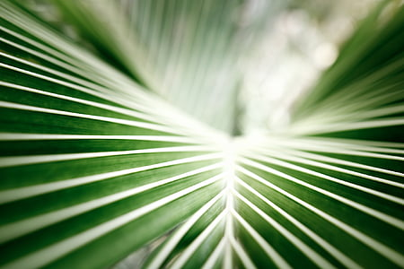coconut leaf, palm, tropical, green, closeup, leaf
