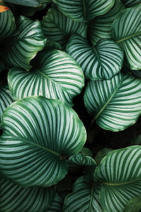 close-up photograph of green leaf plants