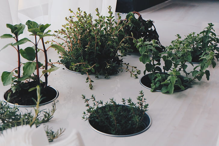 photo of green leafed plants inside pot