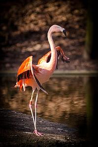 pink and orange Flamingo