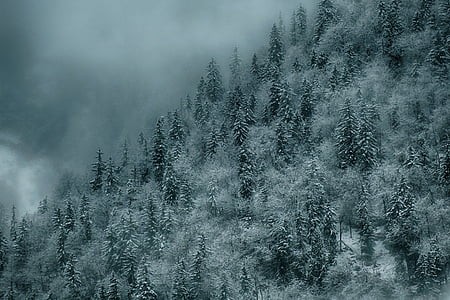 landmark photography of mountain with pine trees covered with fogs