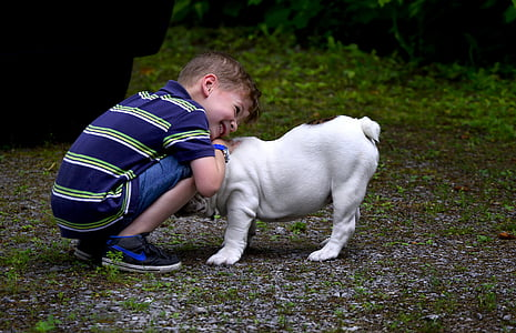 boy hogging English bulldog puppy at daytime