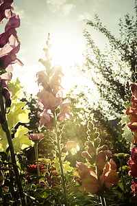 garden of flowers against sunlight
