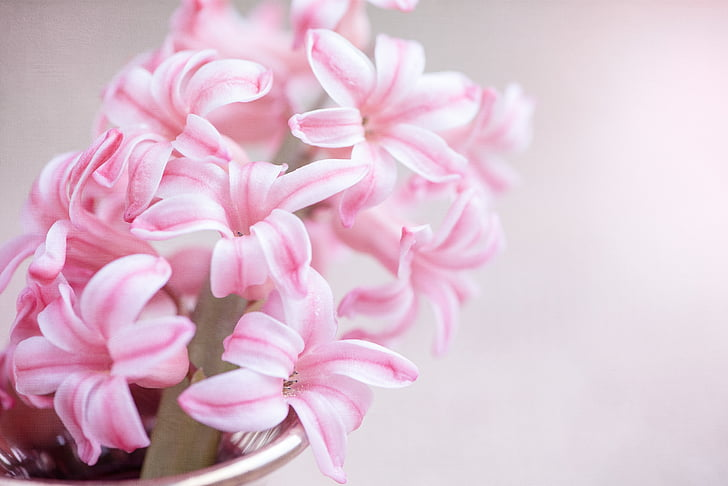 macro photography of pink petaled flowers