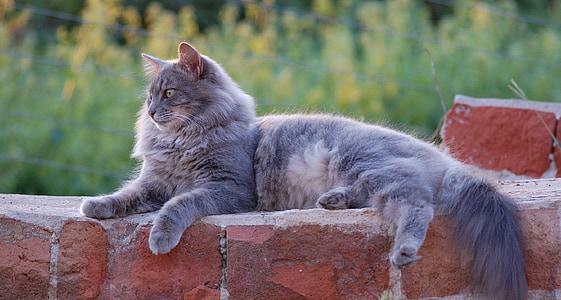 shallow focus photography of gray Persian cat