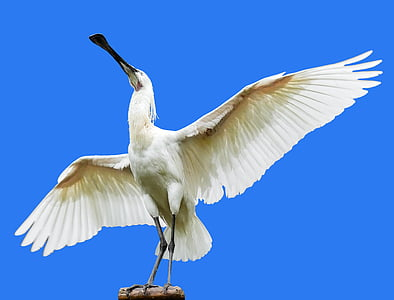 white bird photography during daytime