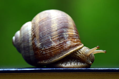 microphoto of snail