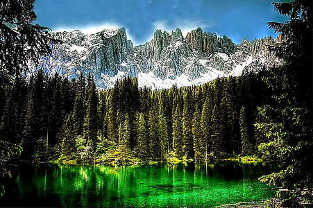 landscape photography of pine trees with body of water