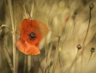 selective color photography of orange petaled flower