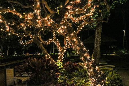 orange string lights on tree
