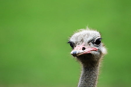 selective focus photography of ostrich head