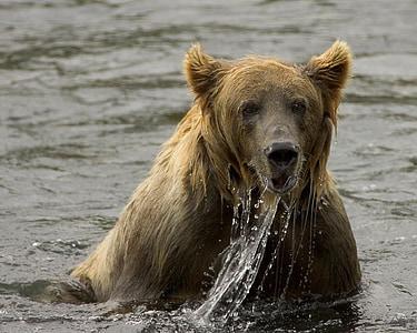 brown bear on body of water photo taken during daytime