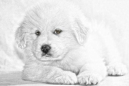 golden retriever puppy sketch