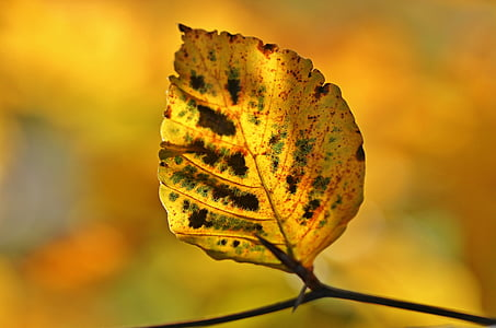 yellow and brown leaf