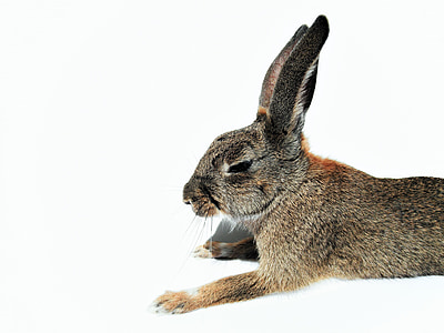 brown and black rabbit in focus photography