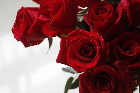close-up photography of red rose bouquet