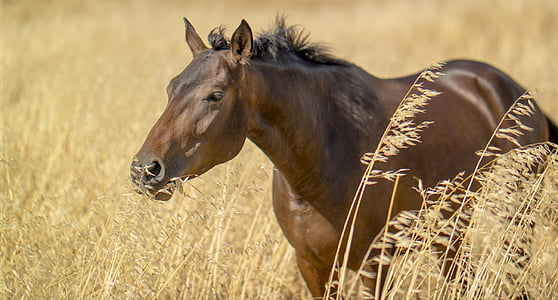 brown horse in close-up photography
