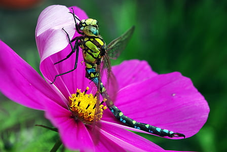 micro photography of green and black dragonfly perched on pink flower