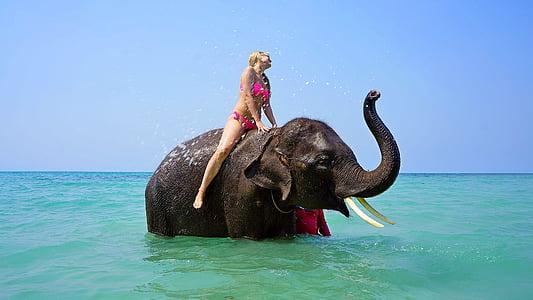 woman wearing pink bikini on black elephant on sea at daytime