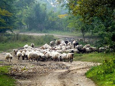herd of sheep near trees