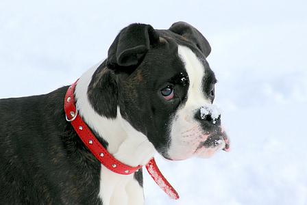 short-coated white and black dog with dog colar