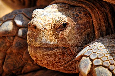 closeup photo of brown tortoise