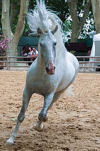 white horse running on beige dirt field during daytime