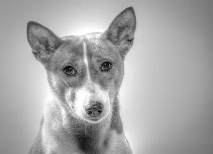 short-coated dog
