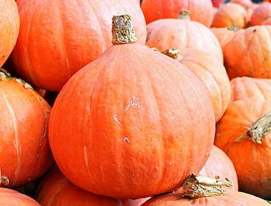 close up photo of orange pumpkin