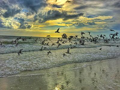 flocks of bird flying during daytime photo