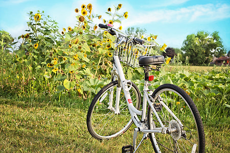 bicycle, bike, sunflowers, summer, leisure, cycle