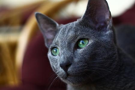tilt shift lens photography of gray cat