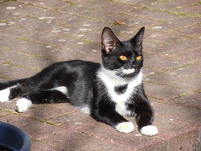 short-haired tuxedo cat lying on concrete pavement