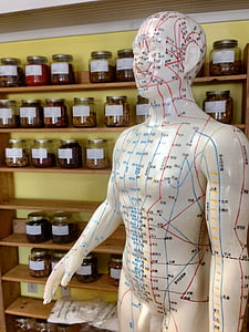 acupuncture points mannequin