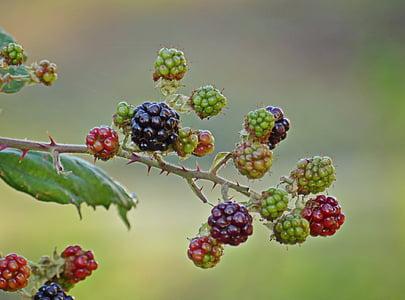 macro photo of raspberry