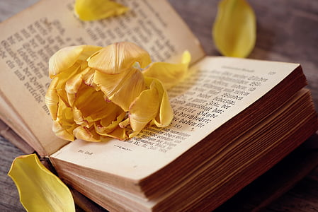 close view of yellow flower petals on opened book