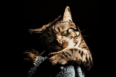 photo of brown tabby cat in low light
