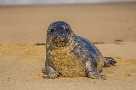 sealion on sand during daytime
